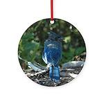 Steller's Jay Round Ornament
