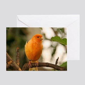 Male Singer Canary Greeting Card