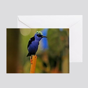 Blue Tropical Bird Greeting Card
