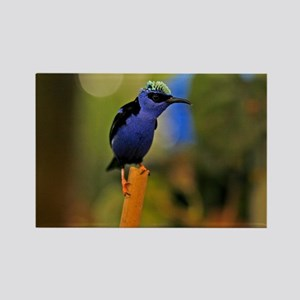 Blue Tropical Bird Rectangle Magnet