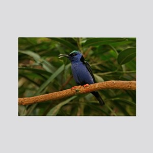 Blue Exotic Bird Rectangle Magnet
