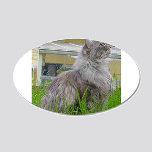 maine coon sitting 3 Wall Decal