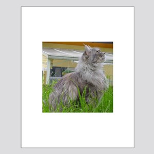 maine coon sitting 3 Posters