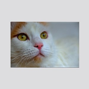 turkish van 2 Magnets