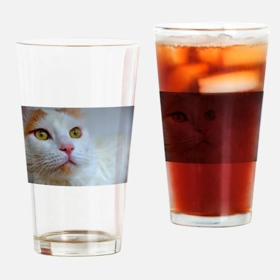 turkish van 2 Drinking Glass