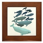Beluga Whale Art Framed Tile