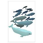 Beluga Whale Art Poster