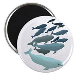 Beluga Whale Art Magnets