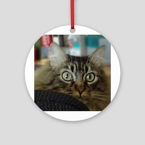 Peeking Main Coon Cat Ornament