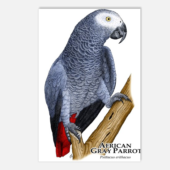 African Gray Parrot Postcards (Package of 8)