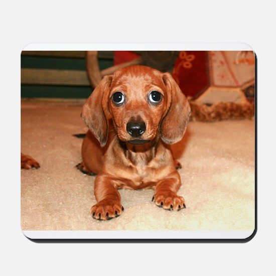 Red Doxie Puppy Mousepad