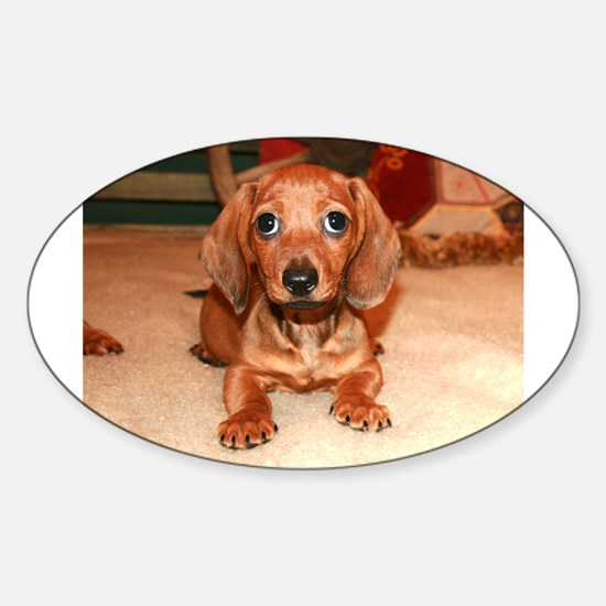 Red Doxie Puppy Oval Decal