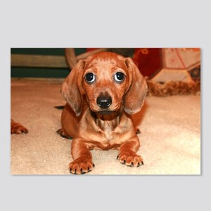 Red Doxie Puppy Postcards (Package of 8)