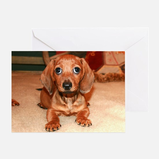Red Doxie Puppy Greeting Card