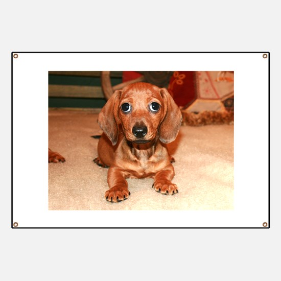 Red Doxie Puppy Banner
