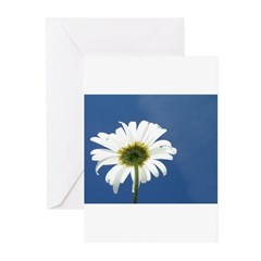 Curly Greeting Cards (Pk of 10)