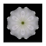 White Petunia II  Tile Coaster