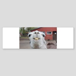 Funny Alpaca Llama Bumper Sticker
