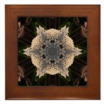 Queen Annes Lace II Framed Tile