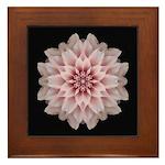 Pink Dahlia I Framed Tile