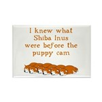Shiba Puppy Cam Rectangle Magnet (100 pack)