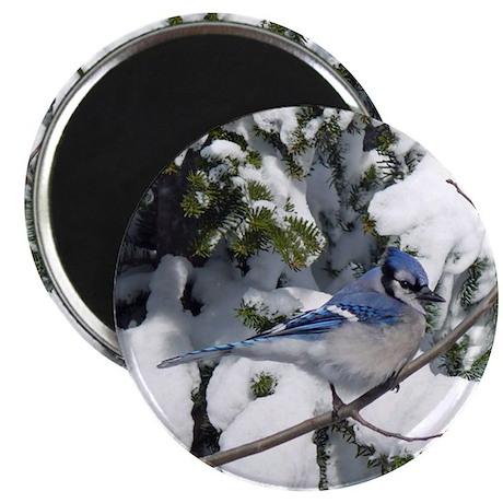 Blue Jay in winter Magnet
