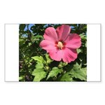 Pink Hibiscus Tropical Flower Sticker