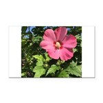 Pink Hibiscus Tropical Flower Rectangle Car Magnet