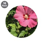 Pink Hibiscus Tropical Flower 3.5