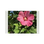 Pink Hibiscus Tropical Flower Magnets