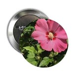 Pink Hibiscus Tropical Flower 2.25