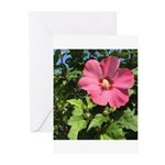 Pink Hibiscus Tropical Flower Greeting Cards