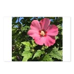 Pink Hibiscus Tropical Flower Postcards (Package o