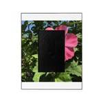 Pink Hibiscus Tropical Flower Picture Frame
