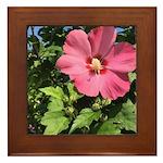 Pink Hibiscus Tropical Flower Framed Tile