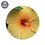 Yellow Hibiscus Tropical Flower 3.5