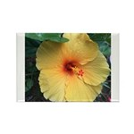 Yellow Hibiscus Tropical Flower Magnets