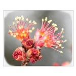 Maple Blossom Small Poster