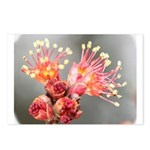 Maple Blossom Postcards (Package of 8)
