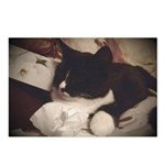 Tuxedo Cat (Sympathy) Postcards (Package of 8)