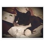 Tuxedo Cat (Sympathy) Small Poster