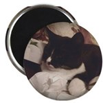 Tuxedo Cat (Sympathy) Magnet