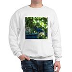 A Visitor Sweatshirt