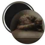 Cat Lounge Magnets