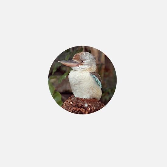 Kookaburra Looking Right Mini Button