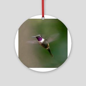 Purple-throated Woodstar Ornament (Round)