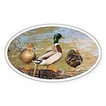 Mallard Ducks Sticker (Oval 50 pk)