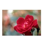 Red Rose Postcards (Package of 8)
