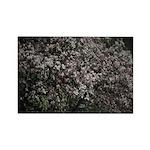 Magnolia Tree Magnets