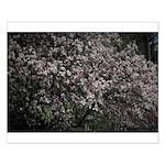 Magnolia Tree Small Poster